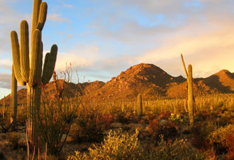 Tucson Desert Oasis Initative / University of Arizona